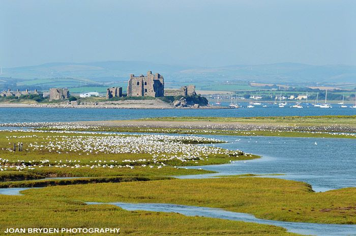 Piel Castle and roosting birds off Walney Island, Cumbria