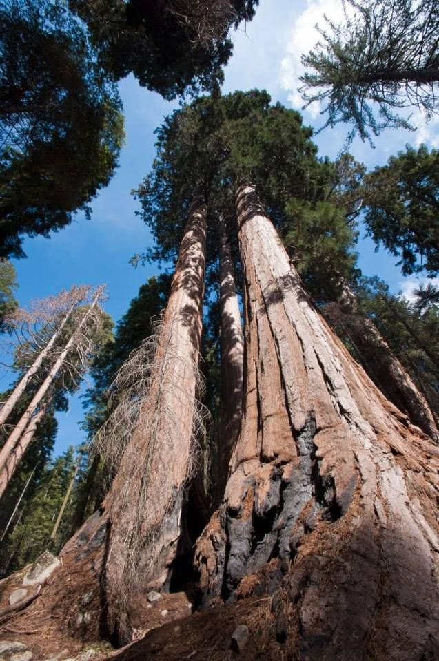 27 best Sequoia and Kings Canyon National