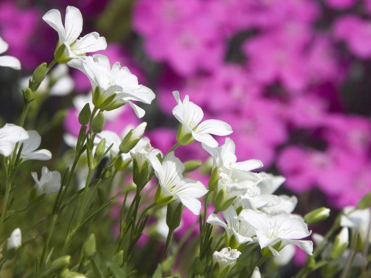 Consider an apline Garden! In an alpine garden you can create different habitats in even a small area. Gardening tips from Powerscourt Garden Pavilion.