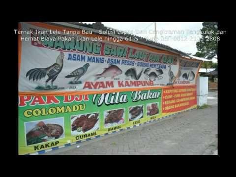 Ternak Ikan Lele Tanpa Bau dan Solusi Lepas Dari Cengkraman Tengkulak