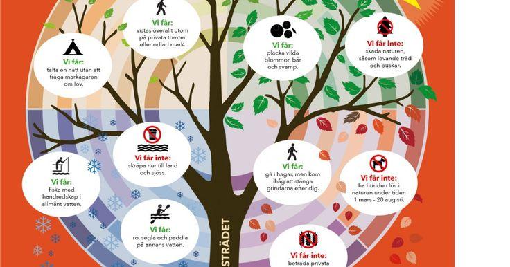 Skogen i Skolans affischer om Allemansrätten
