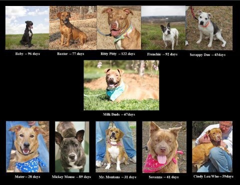 URGENT URGENT, WAKE COUNTY ANIMAL KILL SHELTER RALEIGH NORTH CAROLINA IS DESPERATELY OVER CAPACITY & WILL START KILLING ANIMALS IF WE CANNOT HELP THEM FIND HOMES FOR THEIR ANIMALS. PLEASE HELP: Cindy.Lynch@wakegov.com Joanne.Duda@wakegov.com