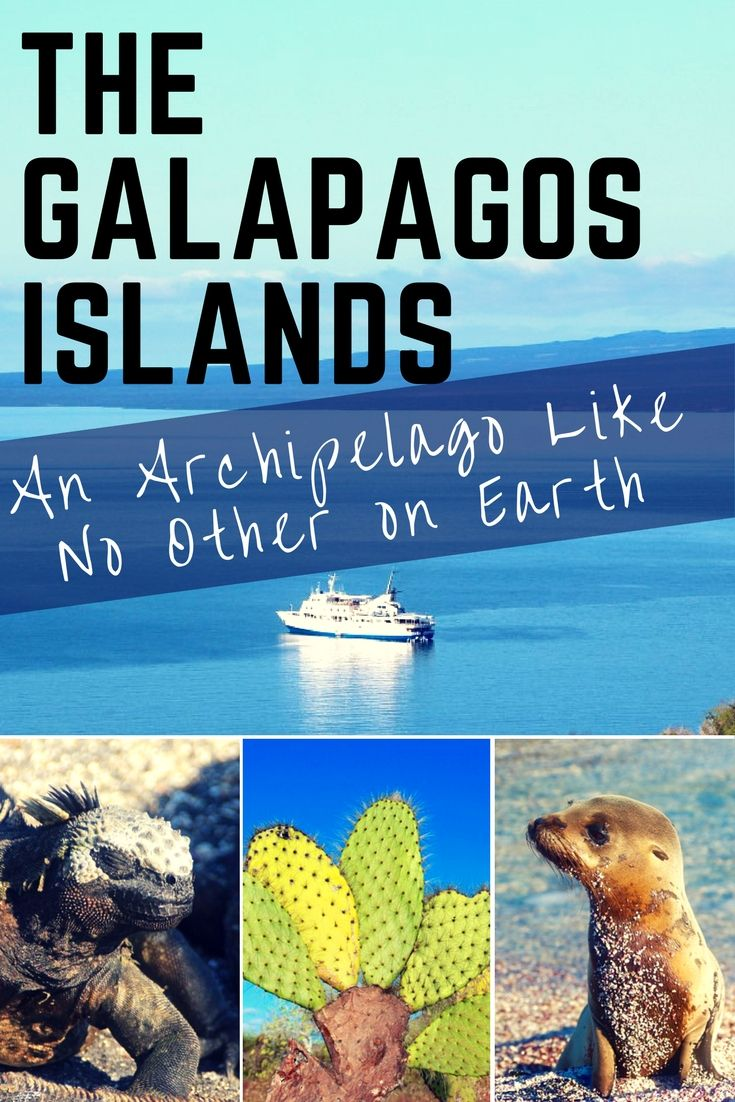 The Galapagos Islands: An Archipelago Like No Other on Earth