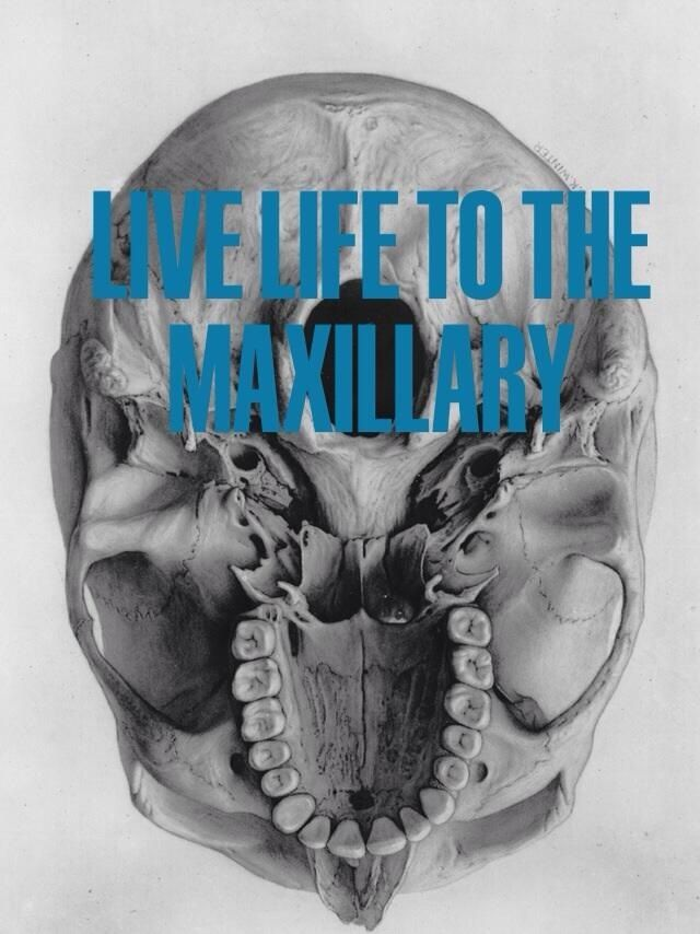 Live life to the maxillary, from your dental internet marketing company, Smile Savvy. www.smilesavvy.com #SmileSavvyInc #dental-internet-marketing