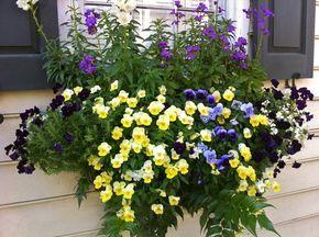 Bunte Blumen in Form von Stiefmütterchen, Veilchen, Löwenmäulchen und blühendem…