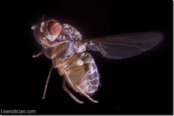 ¿Nunca haz podido atrapar una mosca? Descubre la razón (+ video) - http://www.leanoticias.com/2014/04/11/nunca-haz-podido-atrapar-una-mosca-descubre-la-razon-video/