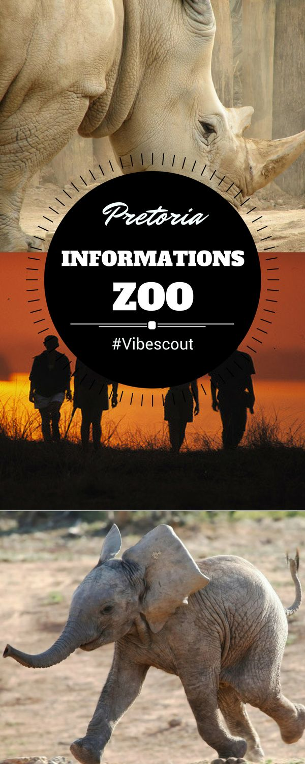 The Pretoria Zoo, more formally known as the National Zoological Gardens is a great spot for families, students, school groups and tourists alike.  This 85-hectare zoo is home to thousands of species including mammals, birds, invertebrates, reptiles and amphibians.