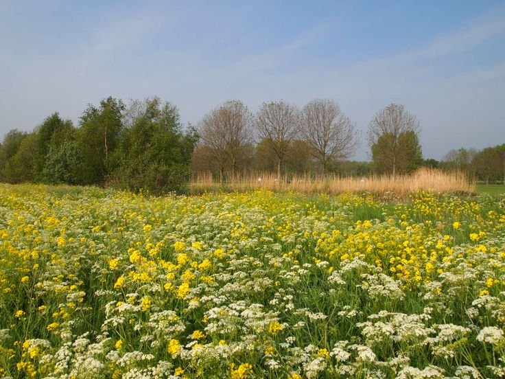 Geel en wit in het polder landschap in Zuid Holland