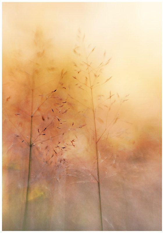 Minimalist nature photography abstract by IonAnthosPhotography