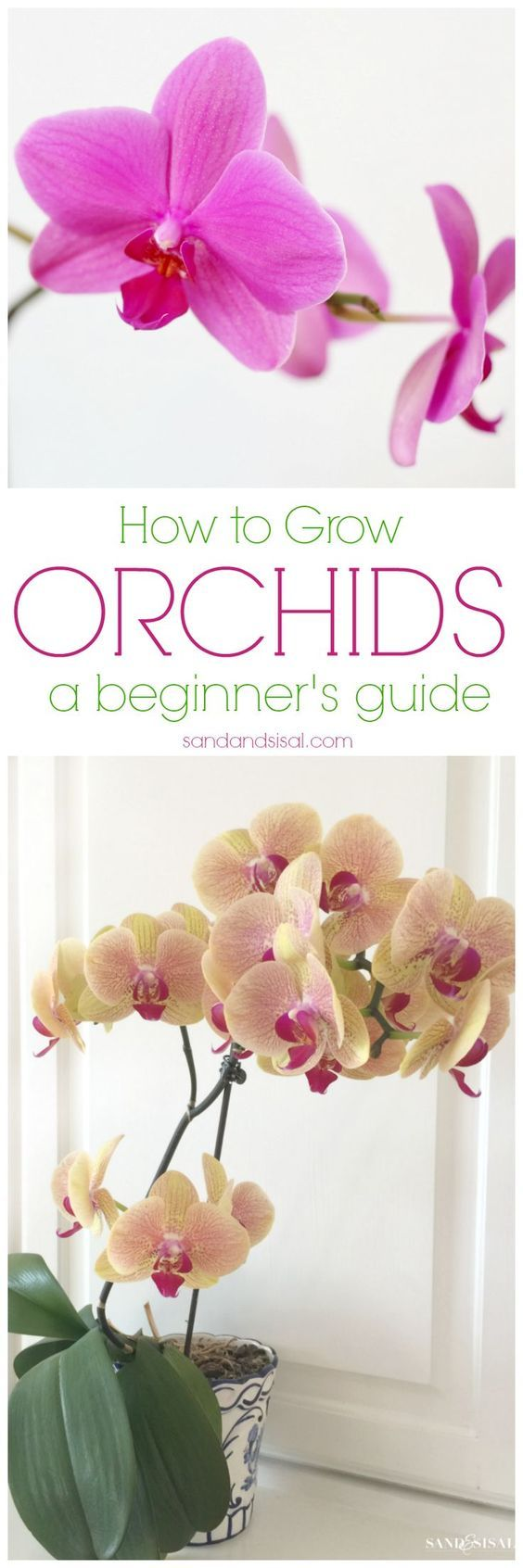 Orchids are actually EASY to grow and are so rewarding with blooms that can last for months! Once you read these easy tips, How to Grow Orchids - a beginner's guide, you will be hooked on orchids forever!