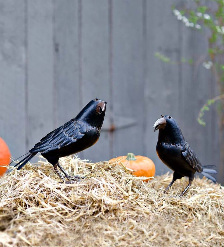 "Decorative Metal Halloween Ravens - say ""Nevermore!"" to ordinary Halloween decorating."
