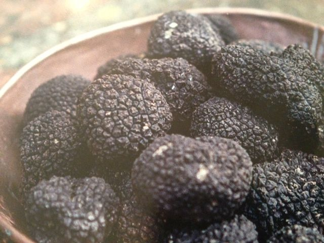 Black British Summer Truffle from  To cook with, come on a truffle day trip with us..  http://www.thefoodtravelcompany.com/trips-details.asp?Auto_ID=356  #Somerset #England #UK