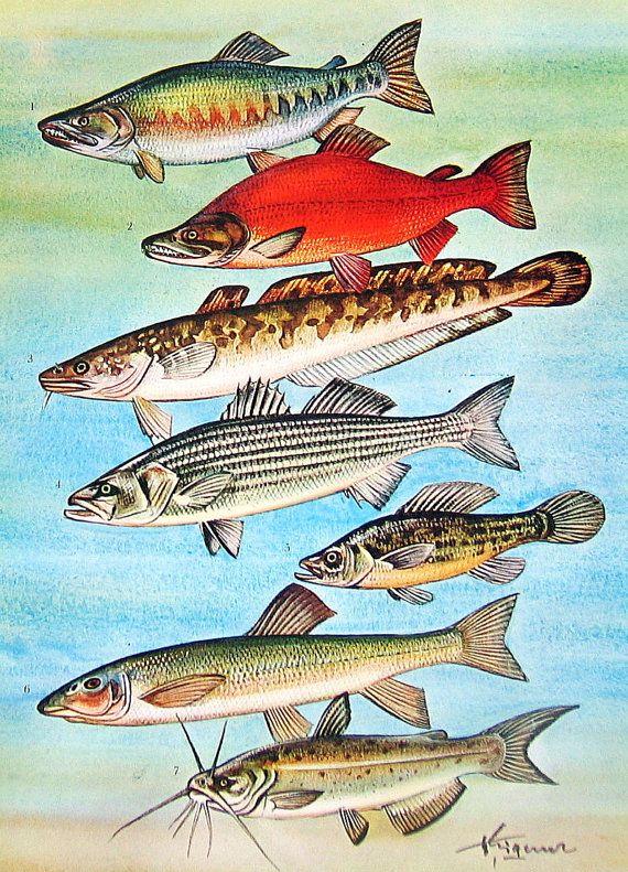 1000 images about fish on pinterest ceramics ceramic for Alaskan white fish