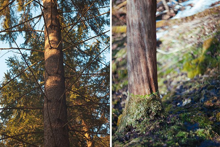 лето весна лес summer spring forest tree