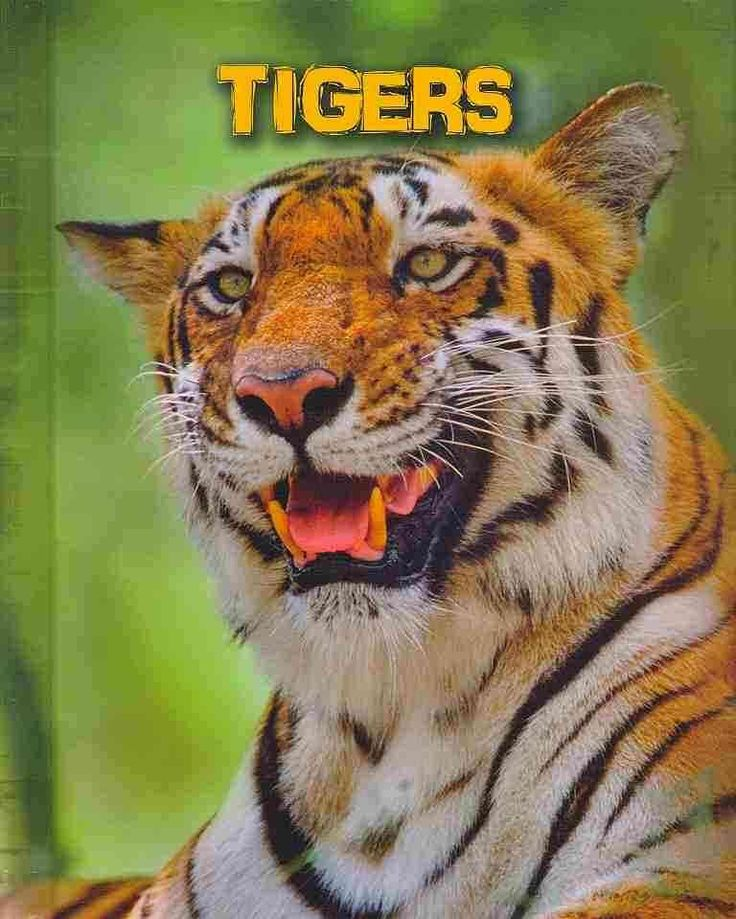 Here's an animal lover's one-stop source for in-depth information on tigers! What do they eat? How do they behave? Are they at risk? This book also includes loads of fun and fascinating facts about ti