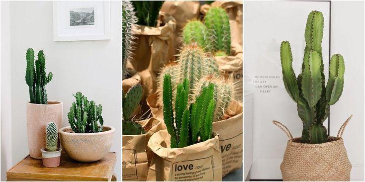 Decorando con cactus