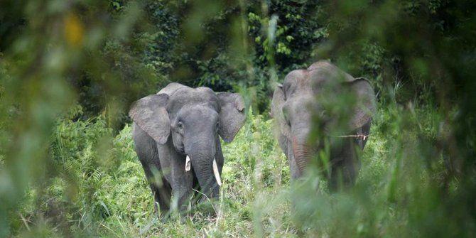 Hewan-hewan langka ini hanya ditemukan di Pulau Kalimantan