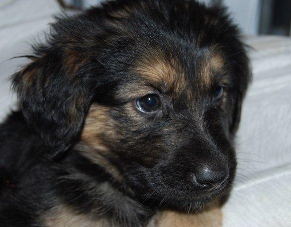 Oukje woont bij een ervaren puppypleeggezin dat al druk bezig is met de opvoeding. Wil je weten hoe het Oukje verder vergaat in haar pleeggezin en op school?   Adopteer haar dan voor 7,50 per maand en steun haar opleiding tot geleidehond.