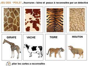 Sciences - peau des animaux
