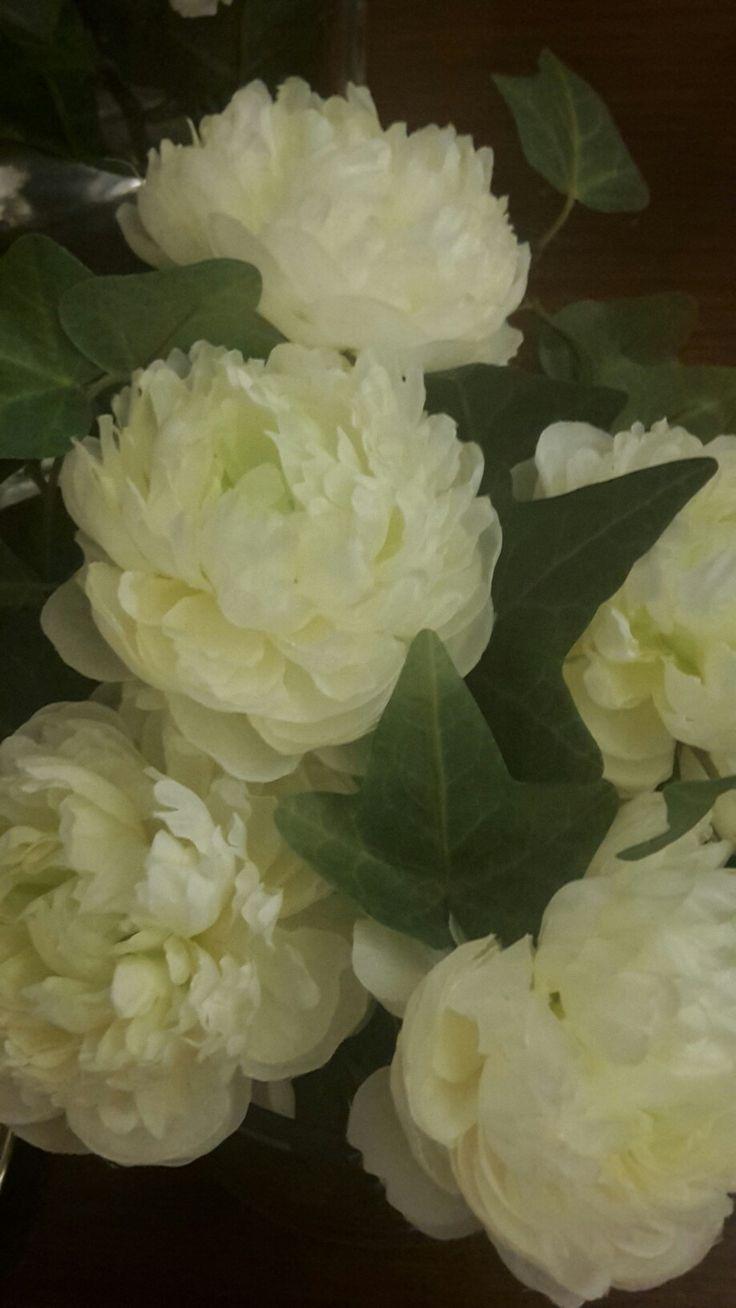 #lifestyle #ranuncoli #verde #herbalife #bisiness #fiori