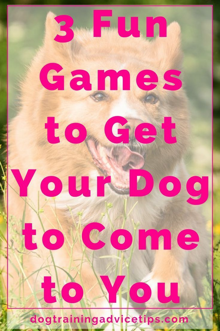 3 Fun Games To Boost Your Dog S Recall Training Dog Training