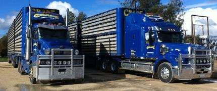 Crane Livestock Transport - Naracoorte