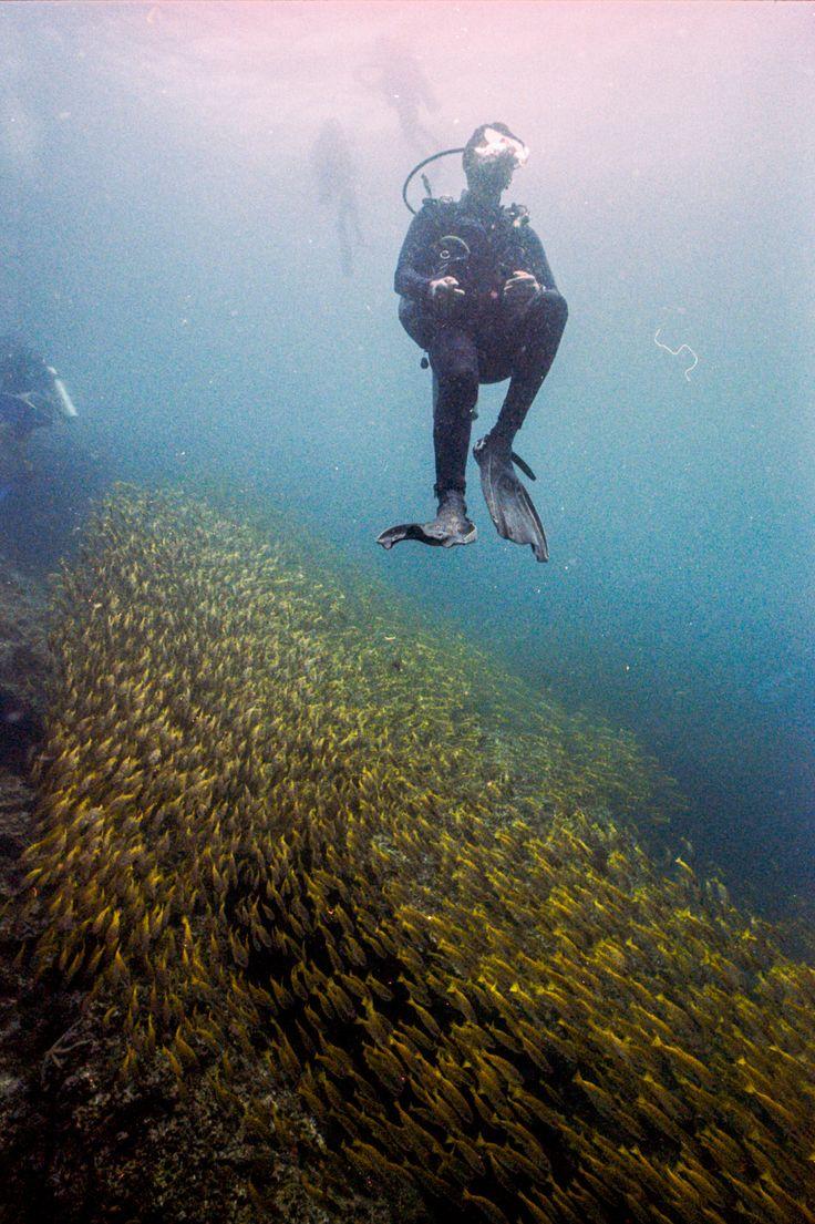 пленочная подводная фотография породы немецкий шпиц
