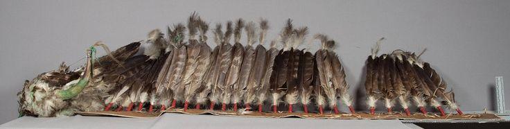 Головной убор из перьев, Шайены. Вид один. Размеры 76 х 17 дюймов.  Состоит из шапки и шлейфа. Основой шапки служит старая фетровая шляпа. В центре шапки хвостовые и грудные орлиные перья, частично окрашеные в зелёный цвет. По обоим сторонам шапки половинки рога, окрашенные в зелёный цвет. Шлейф из пурпурной ткани с подкладкой из белой ткани. В центре добавлен ряд орлиных перьев. Дата поступления 1931 год. Коллекция Victor J.Evans. NMNH.