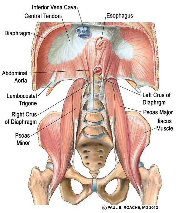 30 Best Anatomy Images On Pinterest Human Anatomy Health And
