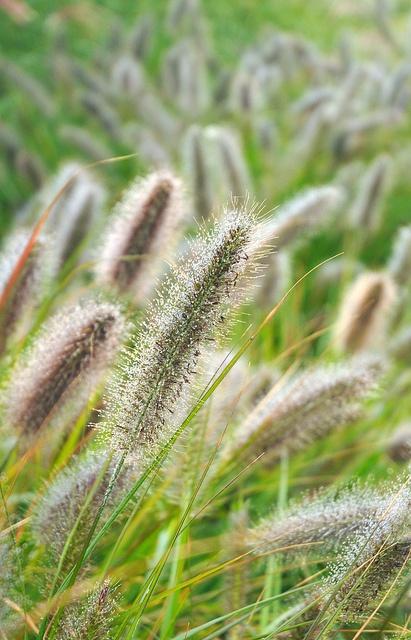 53 Best Images About Nursery Sun Grasses On Pinterest