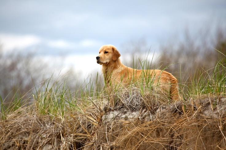 Dog Training Maine