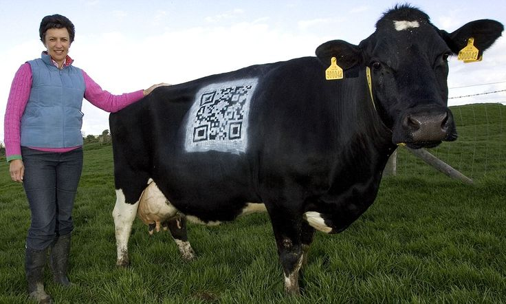 Digital Daisy: Cows get hi-tech makeover so you can find out where your milk really comes from