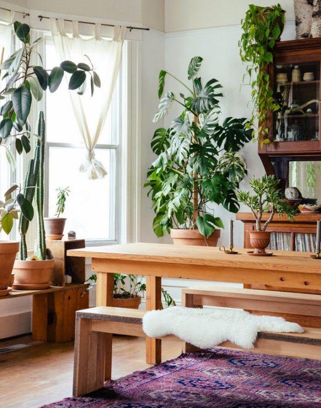 Комнатные растения очищающие воздух в нашем доме » Notagram.ru