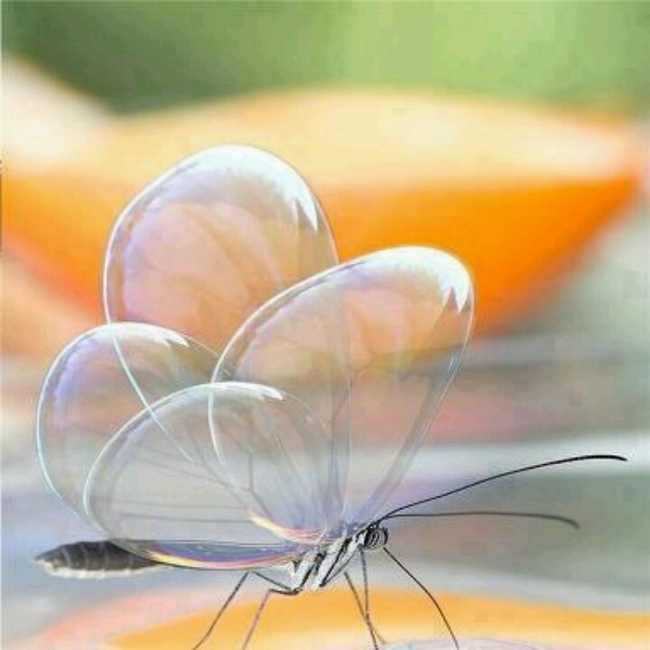 Clear butterfly! :-)