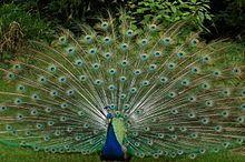 Zoo in der Wingst – Wikipedia