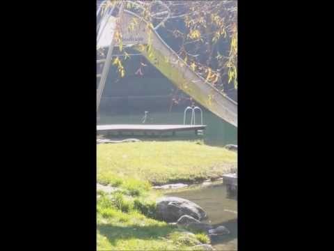 Der Reiher am See 27.10.16  Filmriss I  Wössner See Unterwössen VIDEO 183827  youtu.be/mUUXyd4CjEo  #wössnersee #unterwössen #paradies #paradise #summer #sea #see #reiher #graureiher ~ Handy Filmriss ~ o40 (all for Zero) ® powered by HKH Webmaker © www.LosRein.de ~ FILME : bit.ly/CALISBEST + j.mp/CaliHuaba + j.mp/CaliHuaber + Youtube ~ BILDER : http://bit.ly/MyFOTOs + bit.ly/my-Pics + j.mp/mybestfotos + j.mp/topbilder  ~ Konzerte + Festivals: j.mp/123live ~ Events TS :  j.mp/_TS
