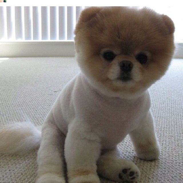 17 best images about Teddy bears :) on Pinterest | Poodles ...