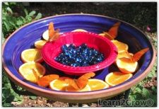 BUTTERFLY MAGNET: Fill a colorful bowl filled w/ orange slices (or any mushy fruit) and hang (or set on a table) in a shady area.