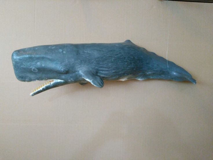 Sperm whale by kataszekely