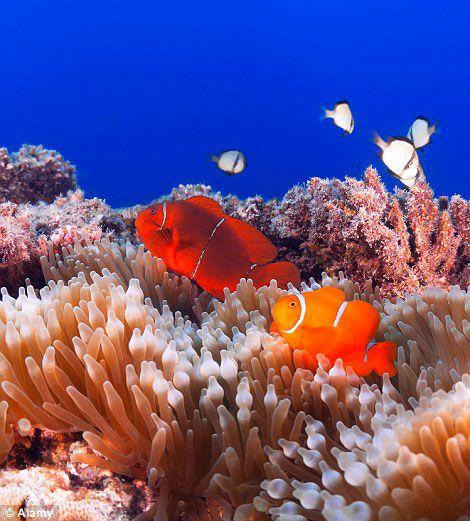 recif de coral et ses poissons - Yahoo Image Search Results