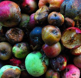 rotten-fruit