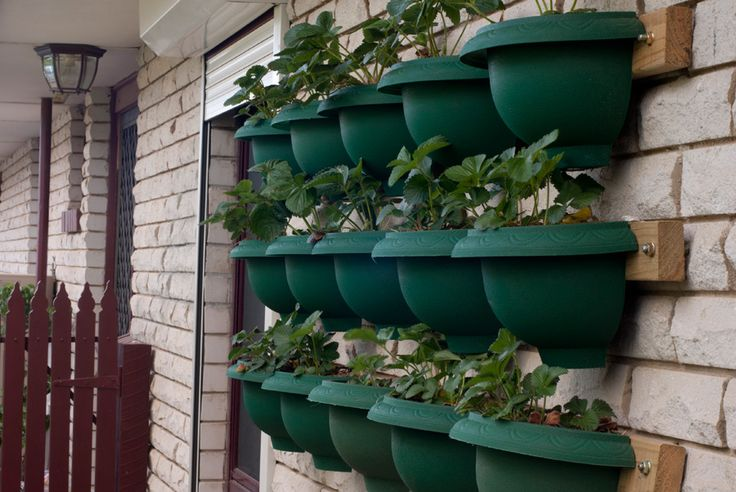 Alternatives Vegetable Gardening for Small Area Having