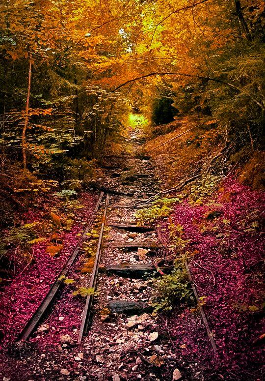 djferreira224:  abandoned railroad