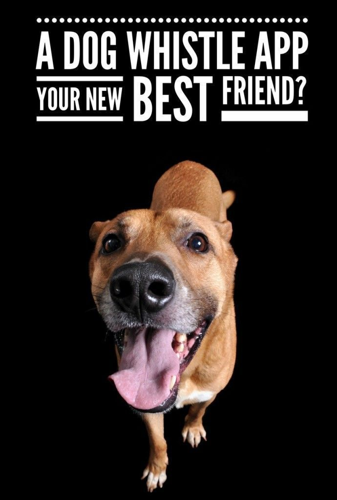 A Dog Whistle App – Your New Best Friend