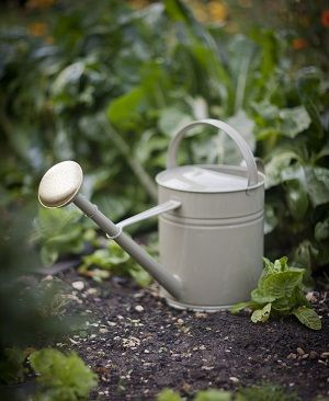 With its traditional shapping and simple styling, this carefully crafted Watering Can comes complete with a fine rounded hose, which makes it perfect for watering indoor plants and seedlings. - See more at: http://www.theoldpavilion.co.uk/for-garden/greenhouse/watering-can-1-5-litre.html#sthash.PlMIgAfL.dpuf