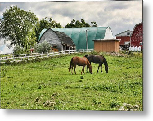Quebec Farm Metal Print  by Tatiana Travelways. Country scene with two horses grazing in a Quebec farm, Canada #Quebec #Canada #Country #September #Horses #animals #farm #WallArt #TravelArt