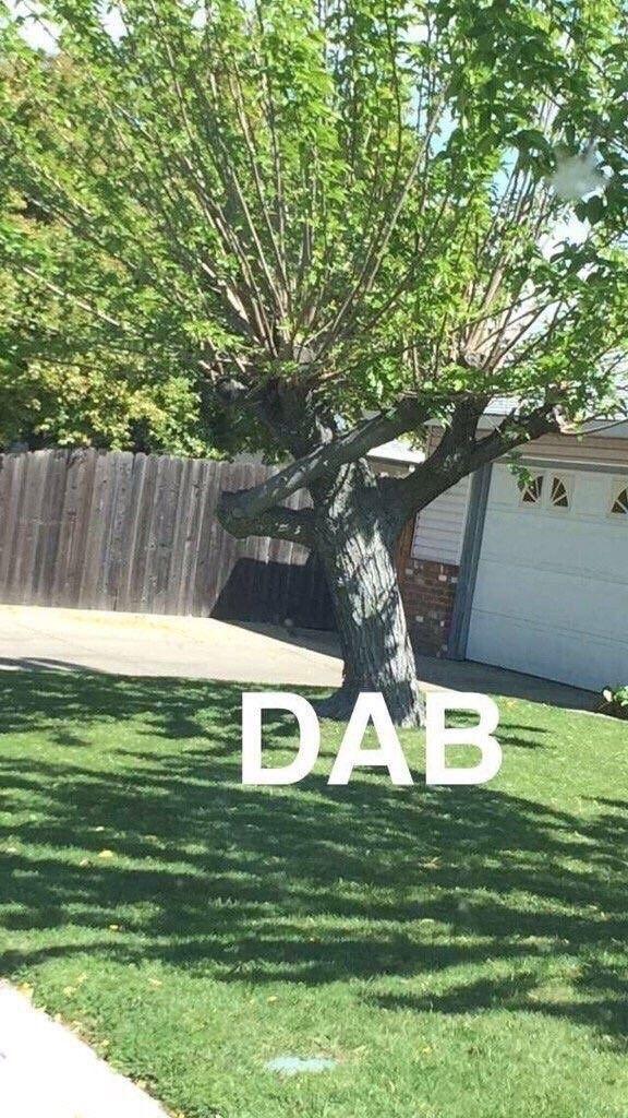 BAH !!!!!! Abatter cet arbre !!!!!!!!!!!!!!!!! =-<