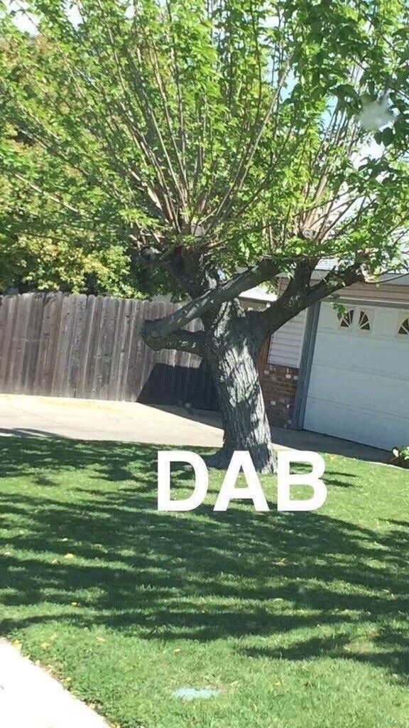 This tree just Dabbed so hard!