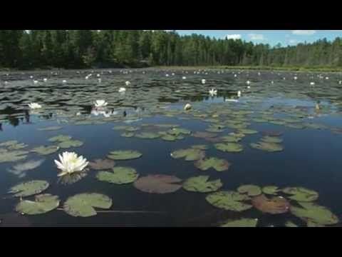 Dan Gibson's Solitudes 25 Natural Beauty - YouTube