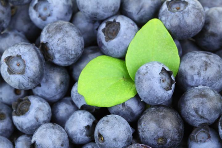 Planting blueberries, BC.